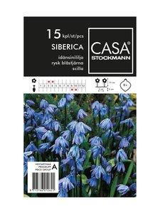 Casa Stockmann - Idänsinililja-kukkasipulit - SININEN | Stockmann