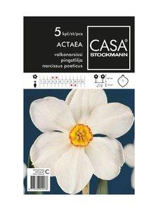 Casa Stockmann - Valkonarsissi-kukkasipulit - VALKOINEN | Stockmann