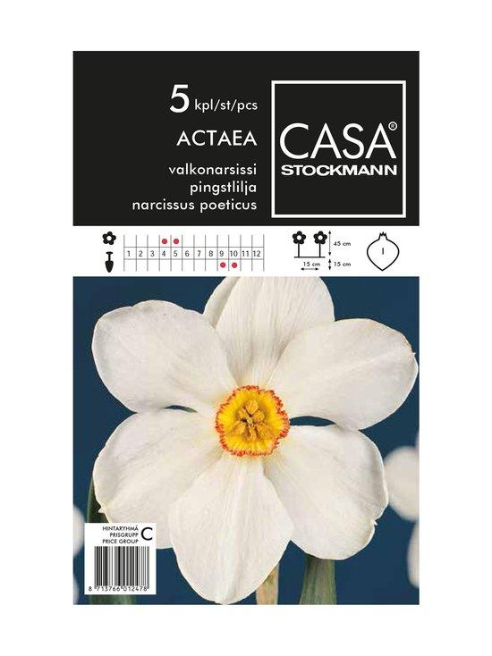Casa Stockmann - Valkonarsissi-kukkasipulit - VALKOINEN | Stockmann - photo 1