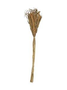 Wikholm Form - Bristle Grass -heinät 65-75 cm - NATURAL | Stockmann