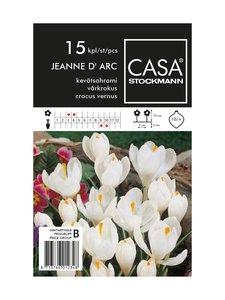Casa Stockmann - Kevätsahrami-kukkasipulit - VALKOINEN | Stockmann