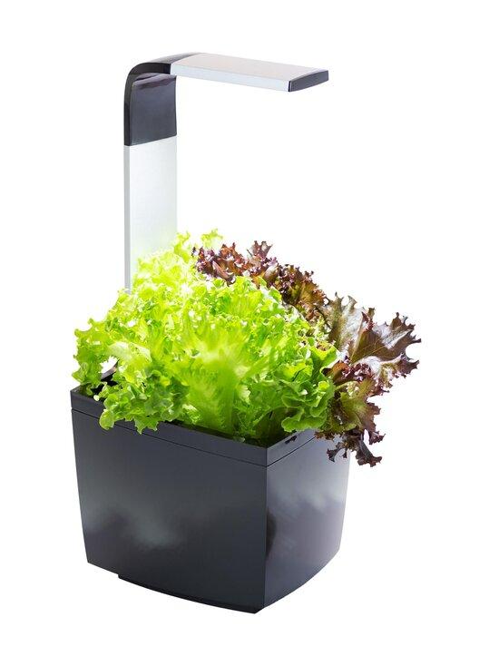 Tregren - T3-keittiöpuutarha ja salaatin kasvatussetti - BLACK   Stockmann - photo 2