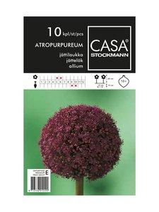 Casa Stockmann - Jättilaukka-kukkasipulit - VIOLETTI   Stockmann