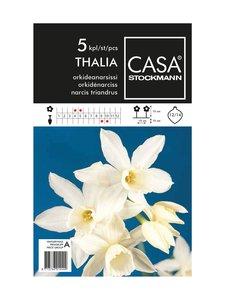 Casa Stockmann - Orkideanarsissi-kukkasipulit - VALKOINEN | Stockmann