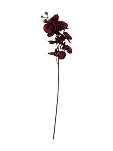 Pentik - Orkidea-koristekukka 59 cm - BURGUNDY | Stockmann