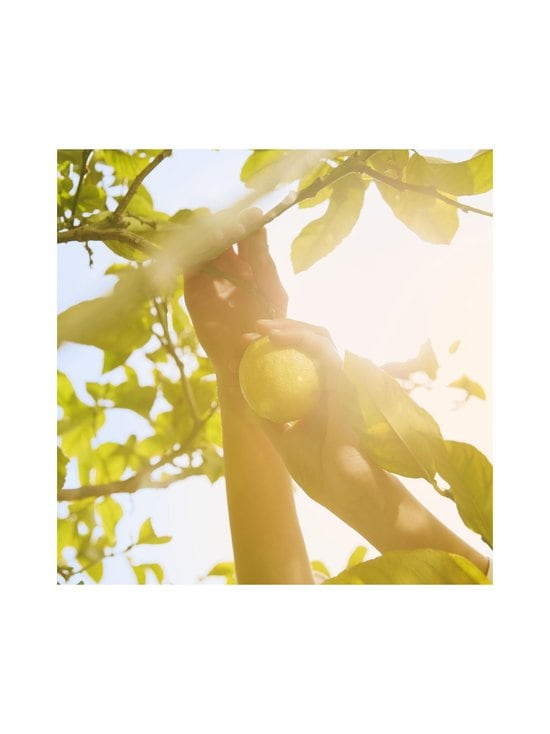 Maison Margiela - Replica Under the Lemon Tree EdT -tuoksu 30 ml - NOCOL | Stockmann - photo 4