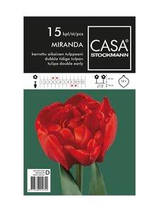 Casa Stockmann - Kerrottu aikainen tulppaani -kukkasipulit - PUNAINEN | Stockmann