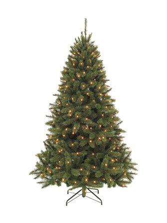 Bristlecone-joulukuusi 155 x 99 cm - Triumph Tree