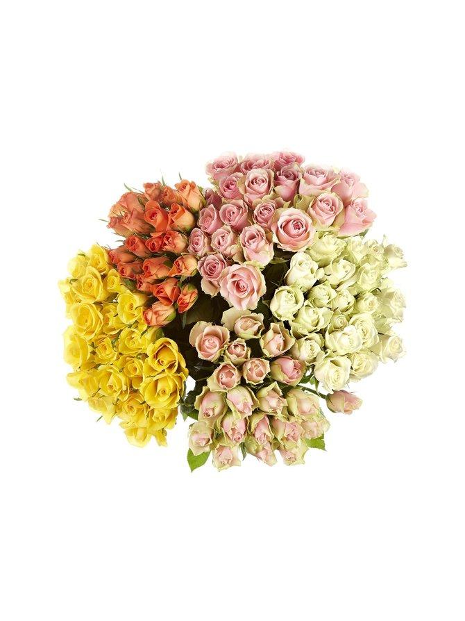 Ruusunippu 20 kpl