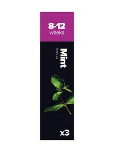 Plantui - Mausteminttu-kasvikapselit - null | Stockmann